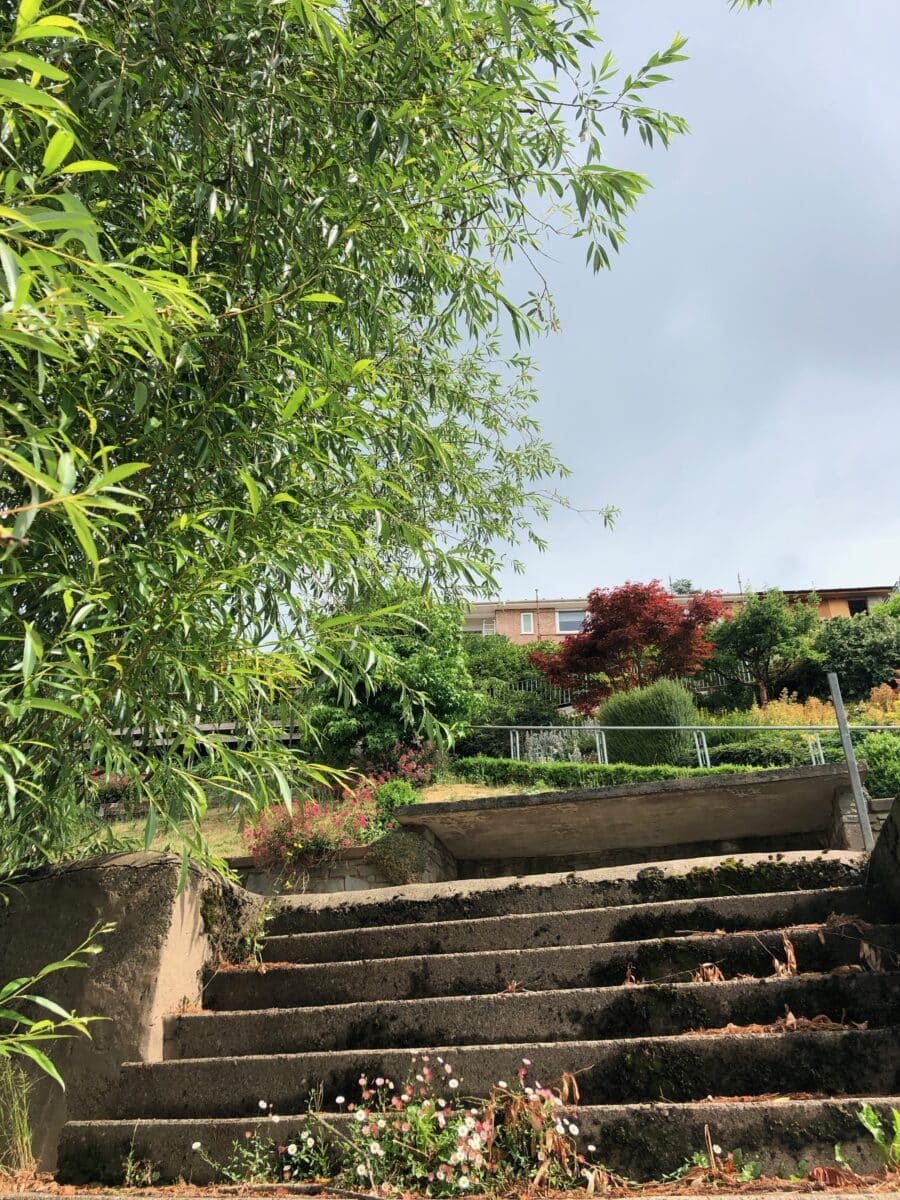 A view from the bottom of a steeply sloping garden looking up towards the house, high in the distance. Stone steps in the foreground, top left of the image obscured by green foliage. A landscaping project by communion architects.