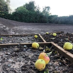 Green and Red apples on a muddy ground. Communion Architects, Hereford.
